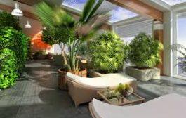 Jardin indoor : les plantes à éviter !
