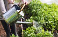 Jardinage : une activité phare dans une maison écologique