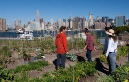 L'agriculture urbaine en faveur de l'écologie