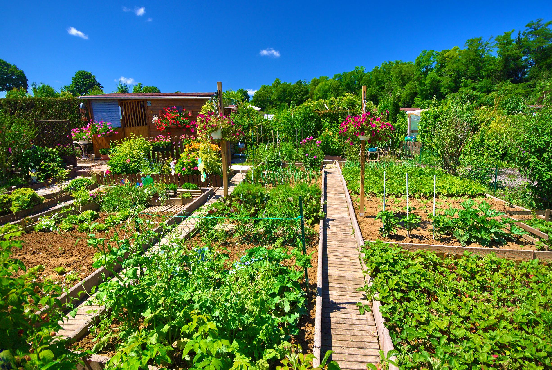 jardin bio optez pour des engrais de fond la maison bio. Black Bedroom Furniture Sets. Home Design Ideas
