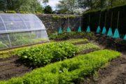 Créer une micro-agriculture biointensive sur une petite surface