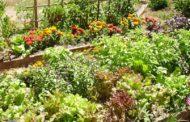 Apprenez le jardinage bio