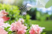 Vos plantes méritent des soins particuliers