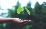 Les 03 bonnes raisons de se mettre à l'écologie