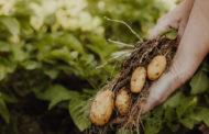 Solution zéro résidus de pesticides